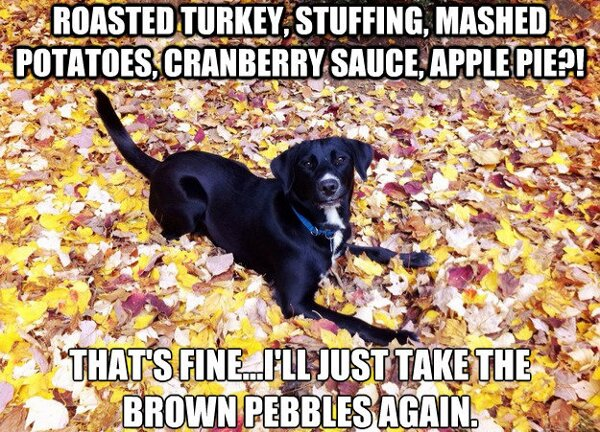thanksgiving-dog-meme